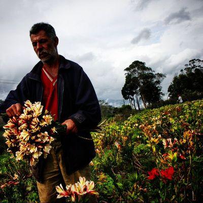 Siembra de flores en el sector Mesa de Aura, cercano a la población de Cordero en el estado Tachira  en Venezuela Venezuelatravel Venezuelaes Gotravelfree Gf_venezuela Gf_colombia IG_GRANCARACAS IgersVenezuela Insta_ve Instapro_ve IG_Venezuela InstaLoveVenezuela Instafoto_ve Instaland_ve Thisisvenezuela Icu_venezuela Ig_lara Igworldclub Ig_tachira IG_Panama Ig_merida Instavenezuela Elnacionalweb Venezuelapaisajes instanature gf_daily venezuelacaptures everydaylatinamerica everydayeverywhere