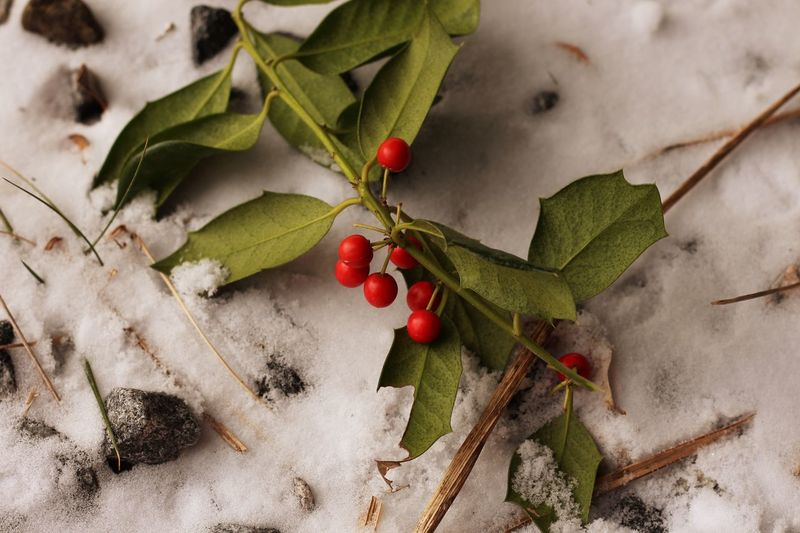 Leaf Fruit Food And Drink Red Healthy Eating Twig Growth Branch Winter Plant Nature