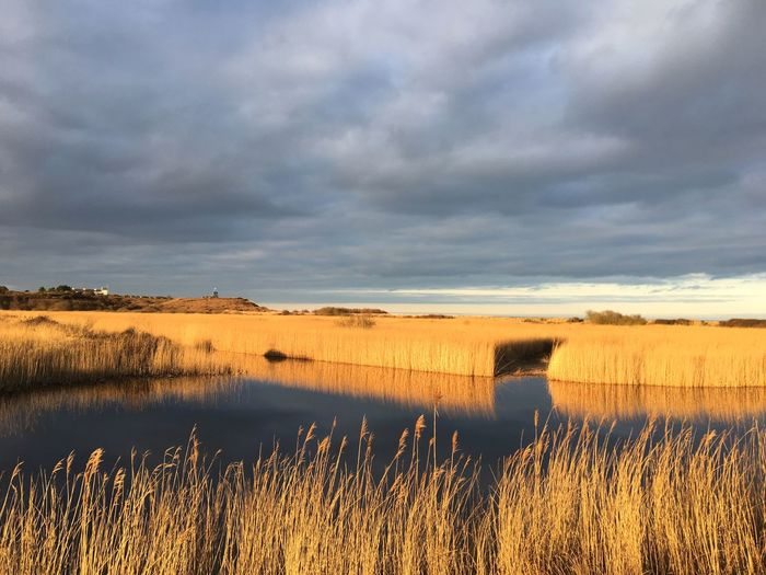 Late afternoon sun at Minsmere Nature Reserve Reedbeds Sky Cloud - Sky Nature Scenics Beauty In Nature Tranquility Tranquil Scene Water No People Lake Grass Outdoors Landscape Day