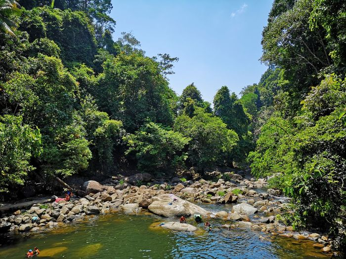 Kenyir Lake Kenyir Lake Resort Malaysia Truly Asia Malaysia Lake View Lake Lakeside Water Waterfall Water_collection Outdoors Outdoor Photography Forest Forest Photography Forestwalk Tree Plant Nature Rock Day Beauty In Nature Growth Solid Rock - Object Green Color River Scenics - Nature No People Animal Themes Tranquility Animal Flowing Water