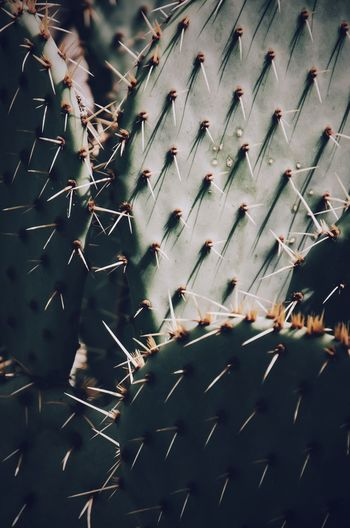Low angle view of cactus
