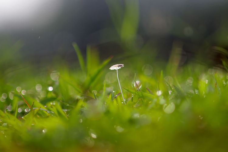 background of grass and mushrooms with bokeh Plant Growth Selective Focus Beauty In Nature Freshness Fragility Vulnerability  Green Color Grass Nature Field Land Close-up Flower No People Flowering Plant Drop Day Tranquility Water Blade Of Grass Outdoors Dew Small Purity