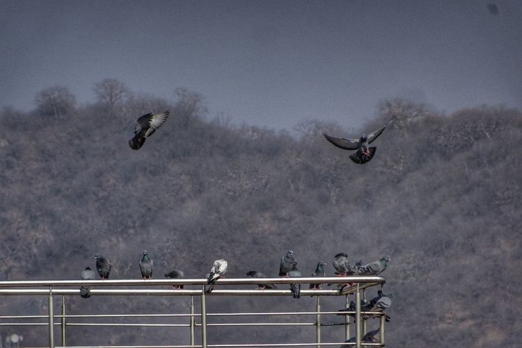 Birds flying against sky