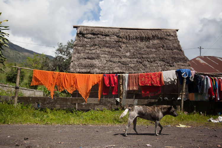 Side View Of A Dog Walking On Road Against Hut