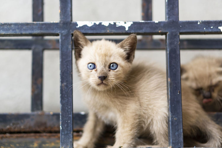 Portrait of a cat looking through metal railing
