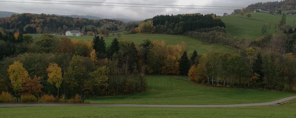 Tree Rural Scene Agriculture Field Crop  Sky Grass Landscape Cloud - Sky