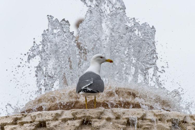 Close-up of penguin splashing water