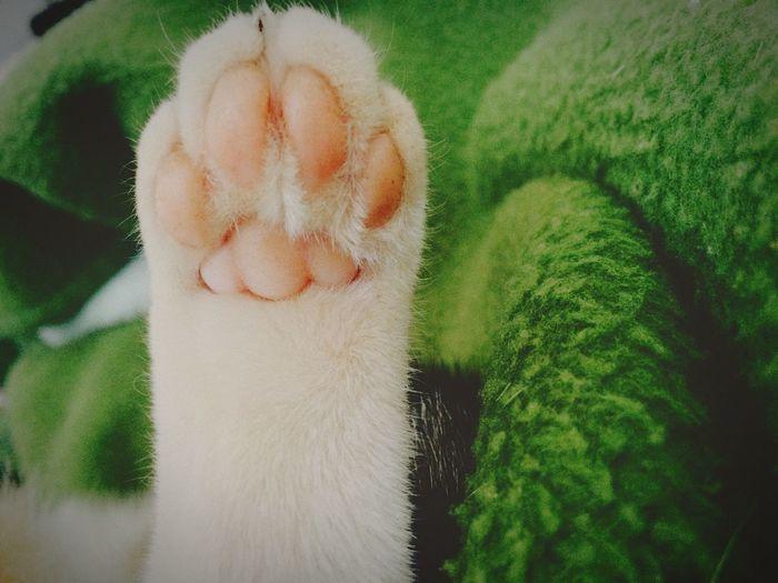The Five Senses Cat Taking Photos