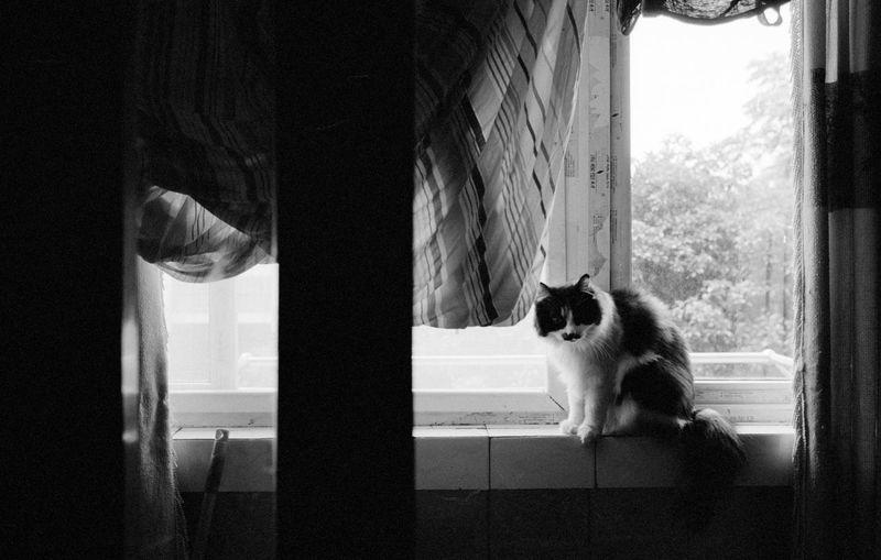 Film Kodak Nanjing TriX400 Animal Animal Themes Blackandwhite Cat China Curtain Day Domestic Domestic Animals Domestic Cat Feline Glass - Material Home Interior Indoors  Mammal Mouth Open No People One Animal Pets Sitting Transparent Vertebrate Whisker Window