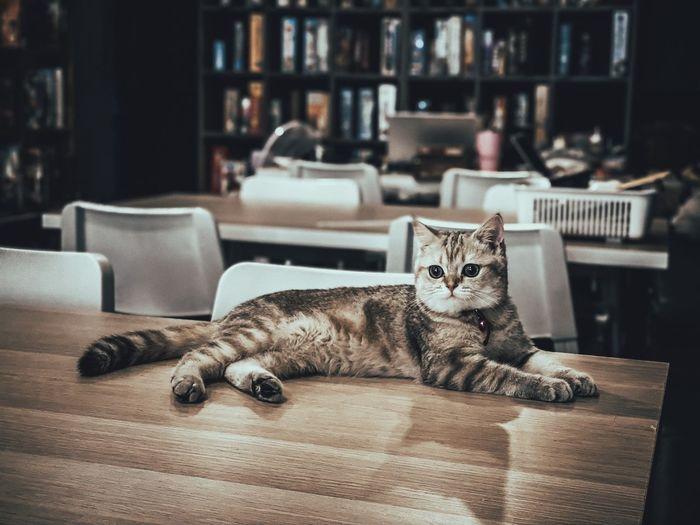 Portrait of a cat lying on floor