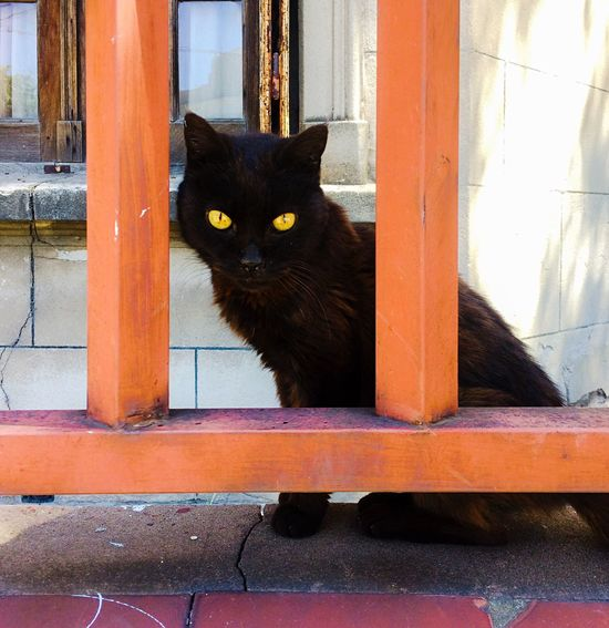 Domestic Cat Feline Pets Black Color Domestic Animals Mammal Cat One Animal Animal Themes Window Door Whisker Yellow Eyes Sitting Looking At Camera No People Day Portrait Outdoors Eye Cat Em Building Exterior Getting Inspired Getting Creative Look Up And Thrive Cat Lovers