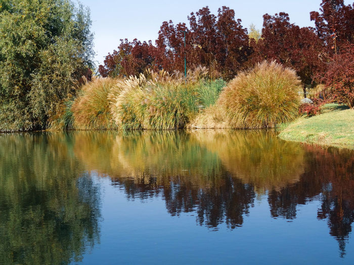 Tree Reflection Plant Tranquility Lake Tranquil Scene Water Beauty In Nature Scenics - Nature Waterfront Sky Nature Growth No People Day Non-urban Scene Idyllic Outdoors Autumn