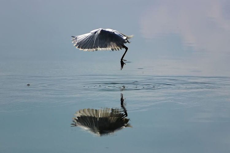 Bird flying above water