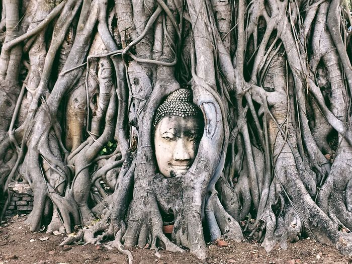 Buddha Statue On Trees In Forest