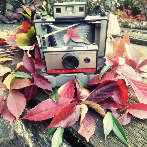 Nature Green Color Pink Color High Angle View Leaf Close-up Plant Outdoors No People Memories Creativity Plant Lifeaparat polaroid 220