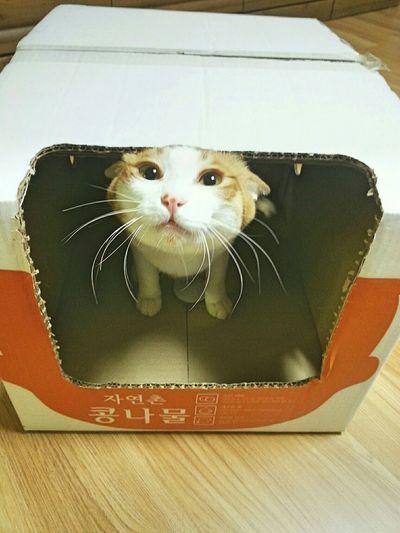 Cat Cat In The