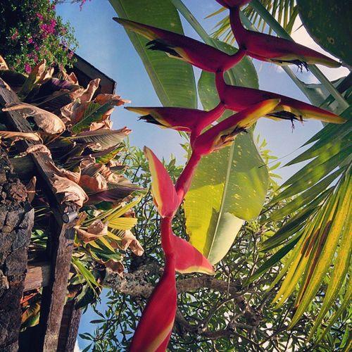 Bananaflower Banana Pisang