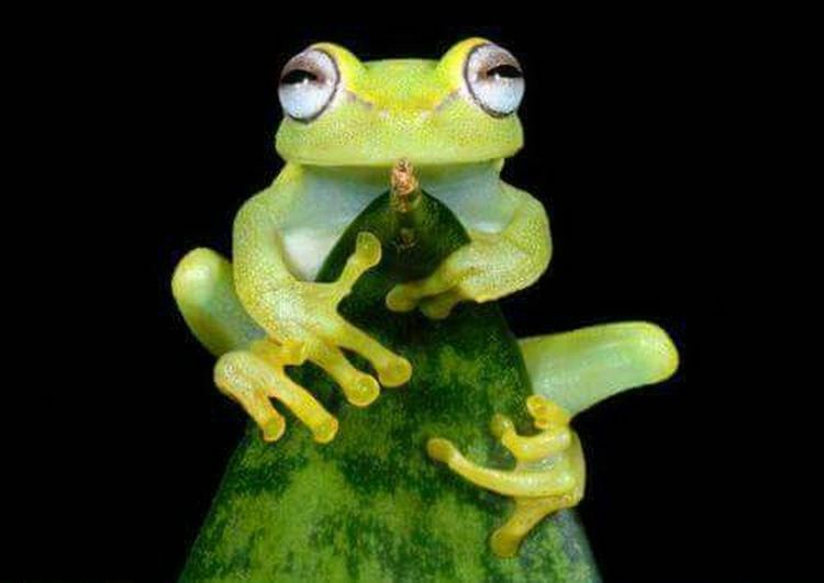 I love frogs. ...had to share