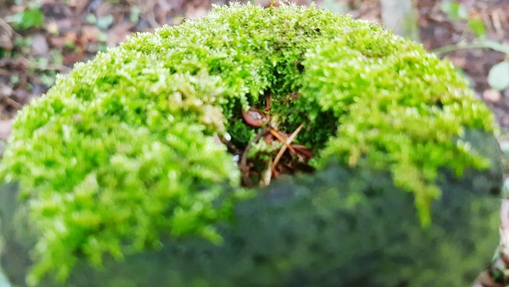 Mossy fencepost Green Color Nature Growth Plant Beauty In Nature Day No People Close-up Outdoors Moss Mossporn Mossy Mossy Tree Moss-covered Moss Close Up Fencepost Fence