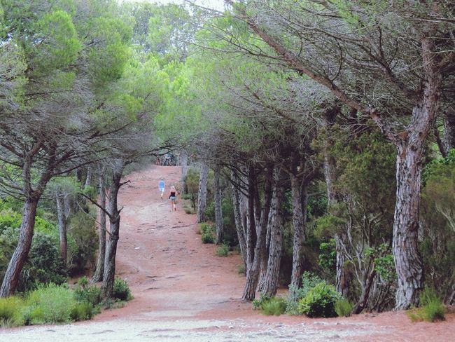Porquerolles Island Trees Best Place Ever Remember Holidays