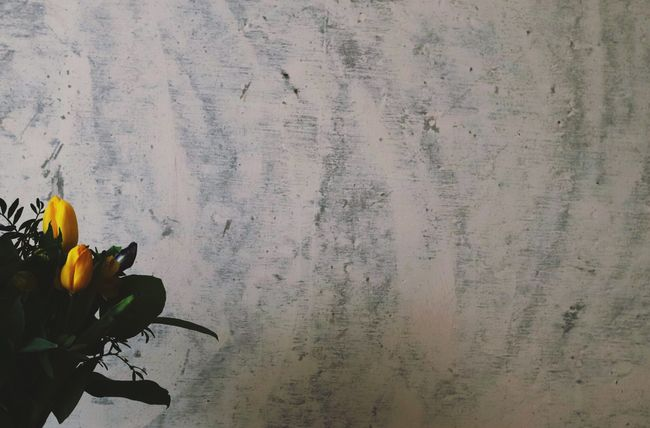 Flw Wall Bouquet Flowers Green Tulip Flower Nature No People Plant Close-up Day Fragility Freshness Flower Head