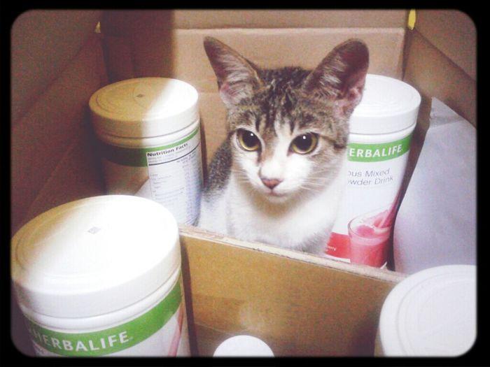 Malaysia Herbalife Kitty