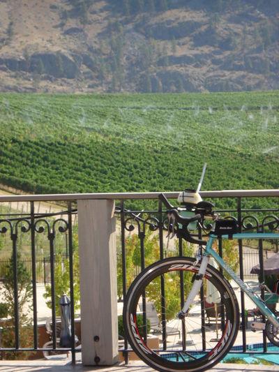 Absence Bicycle Bristishcolumbia Day Diminishing Perspective Empty Environmental Conservation Escalator Journey Leading Railing The Way Forward Transportation Wine Region Wine Tour
