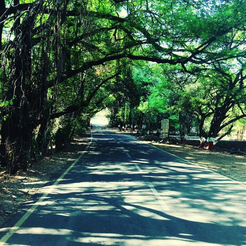Inside the University of Pune campus Nature Tree Beauty In Nature First Eyeem Photo