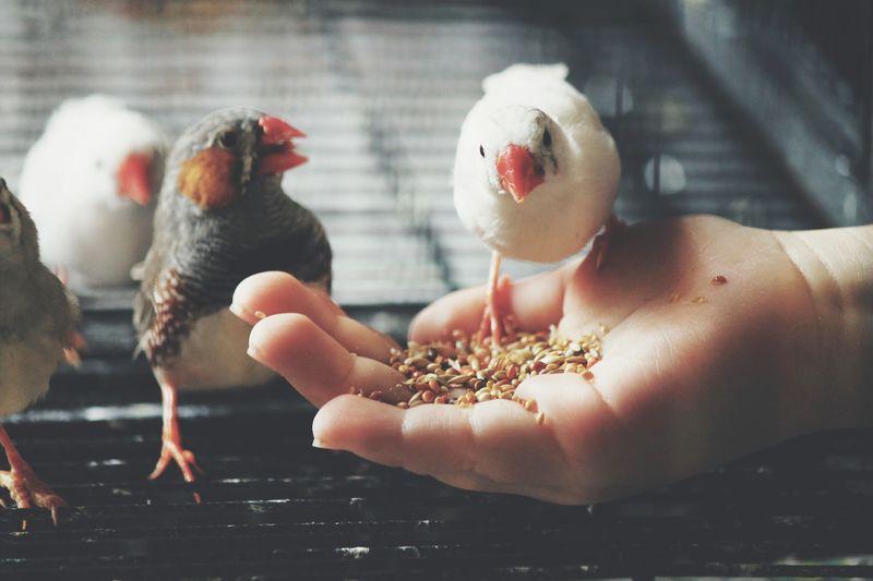 Bird feeding. Human Hand Animal Themes Bird Young Animal Pets Perching EyeEmNewHere
