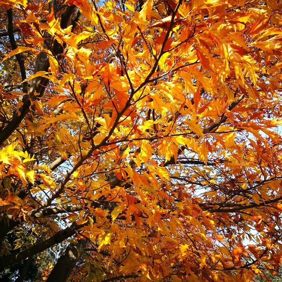 Nature Beauty In Nature Autumn No People Sky