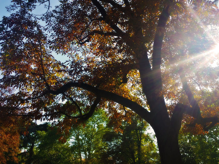 Little pieces of autumn Beauty In Nature Branch Bright Day EyeEm Best Shots EyeEm Nature Lover Green Green Color Growth Lens Flare Low Angle View Majestic Nature No People Non-urban Scene Outdoors Scenics Streaming Sun Sunbeam Sunlight Tranquil Scene Tranquility Tree WoodLand