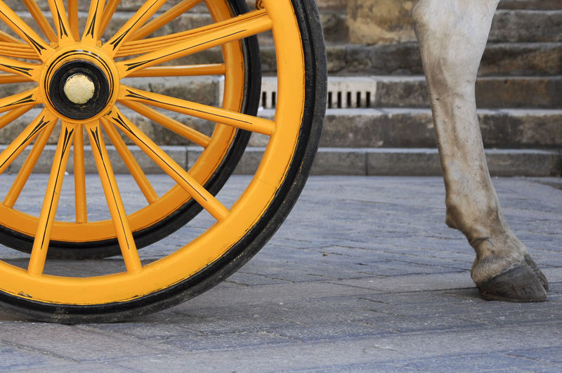 Low Section Of Horse By Cart Wheel On Street