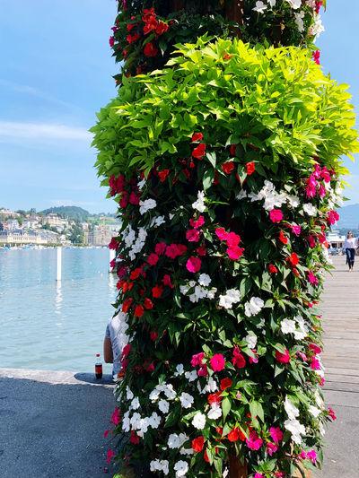 Boat Luzern