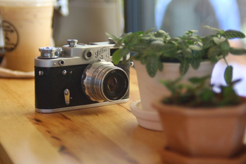 Close-up of camera and potted plants on table