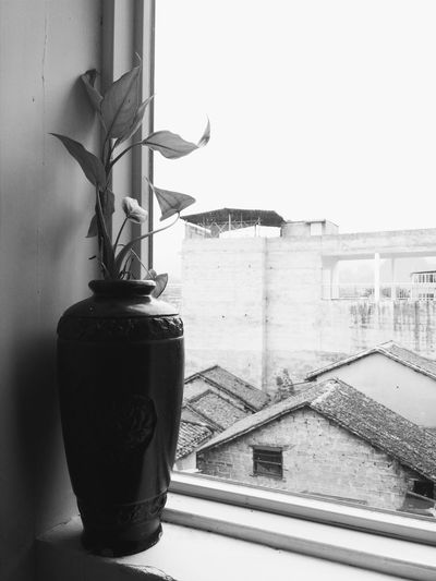 The look out side with window. The view of xingping old town with the plant pot i the foreground. Plants 🌱 Xingping China Yangshuo