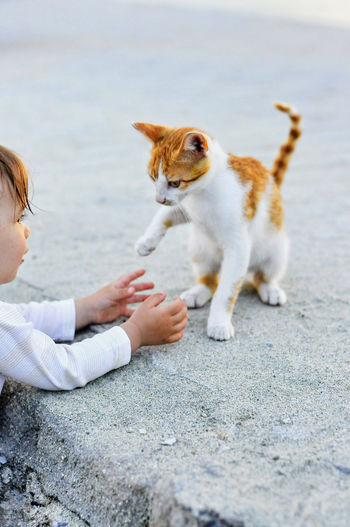 A baby Animal Themes Childhood Discovering Life Domestic Animals Domestic Cat Exploring Life Feline Friendship Ginger Cat Kid And Kitten Kitten Kitty Kitty Cat Kitty Love Kittycat Pets Playing With Cat Playing With Kitten Playing With Kitty Restless Kitty Shaking Pet Portraits