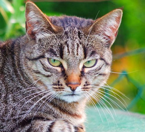 Cat Guardian Cat Portrait Portrait Of A Cat Nature's Diversities Cats Cat♡ Cat Lovers Cats Of EyeEm Cats 🐱 Cat Eyes Cat Photography Cat Watching Cateyes Pet Portraits