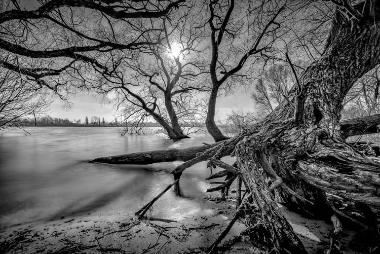 Bare trees on riverbank during winter