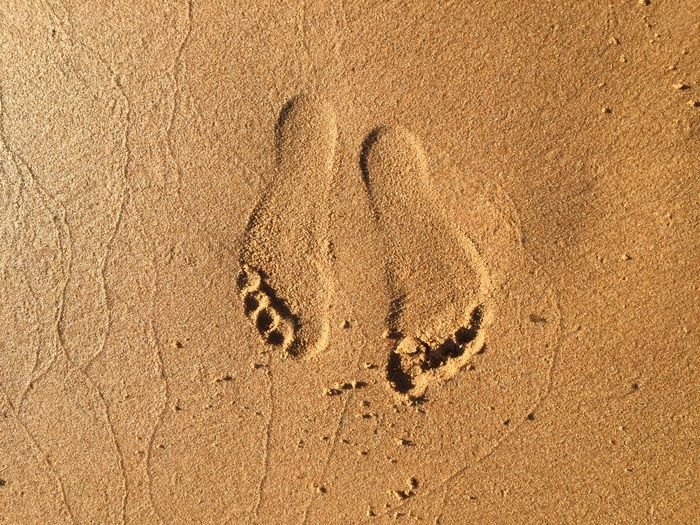 Summer barefoot Sand Land Beach FootPrint High Angle View No People Nature Paw Print