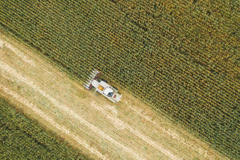 Aerial view of tractor harvesting in corn field. drone shot flying