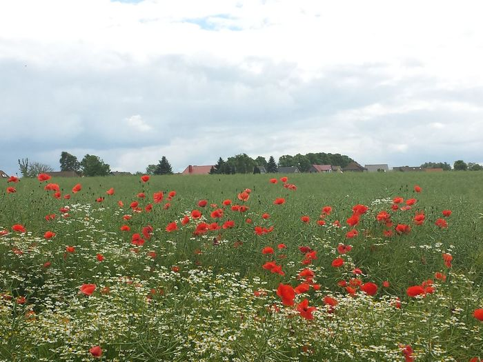 Priwall Mi Lugar Alegre....My Happy Place Baltic Sea My Flower Obsession The Purist (no Edit, No Filter) Landscape
