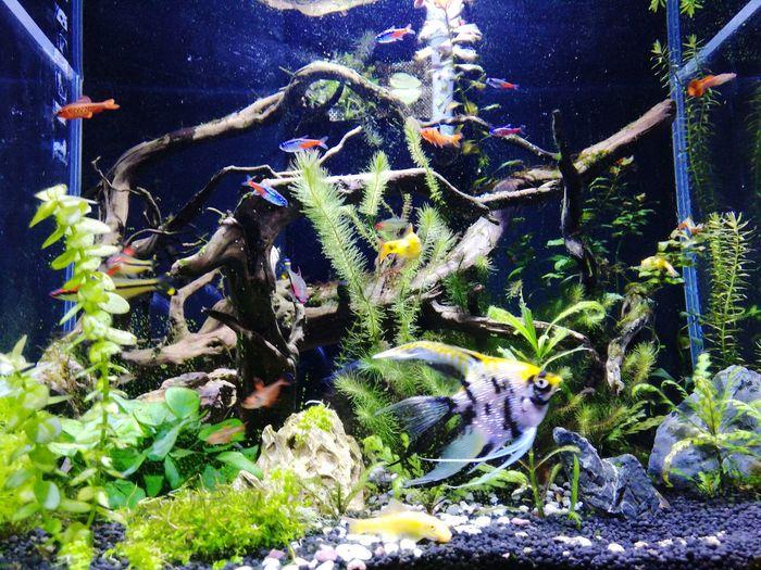 短暂的记忆 Fish NaturePlant
