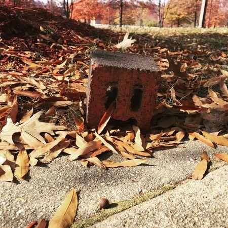 Brick by Kesi J. Marcus Autumn Brick Change Close-up Day Face Leaf Nature No People Orange Outdoors