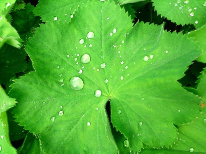 Nature is beautiful 💚 Nature Leaves Waterdrops RHS Rosemoor Devon Color Palette