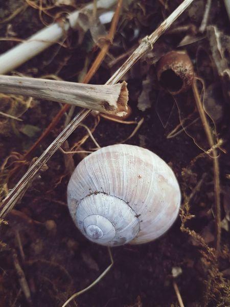 White snail house lying on soil Soil Nature Texture Outdoors Stem Stiel Protection Schneckenhaus Schutz Schneckengehäuse Erde Close-up Animal Themes Snail Shell Mollusk Gastropod Invertebrate Slug Slow Ground Animal Shell Arthropod