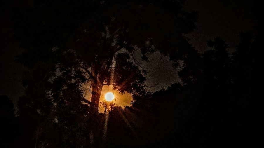 Outdoors No People Sky_collection Nightphotography Sky Photography Trees At Night Sky At Night Scenics Personal Perspective Full Moon