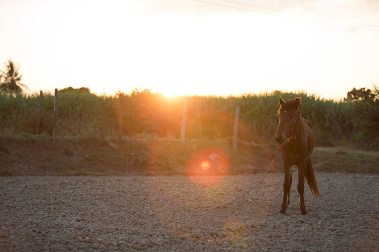 Full Length Sky Sunset One Person Nature One Animal Road Lens Flare Mammal Landscape Transportation Sunlight Domestic Animals Domestic Dirt Pets Adult