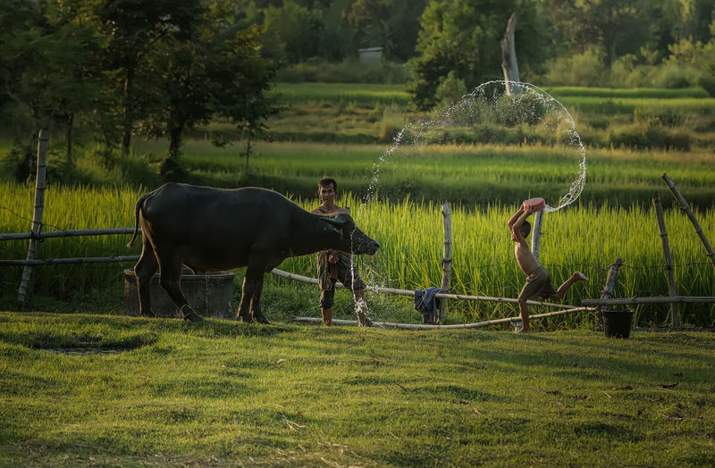 Boy By Grandfather Throwing Water On Buffalo At Farm