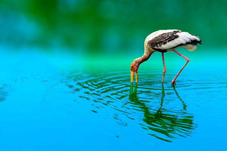 Close-up of a bird in water