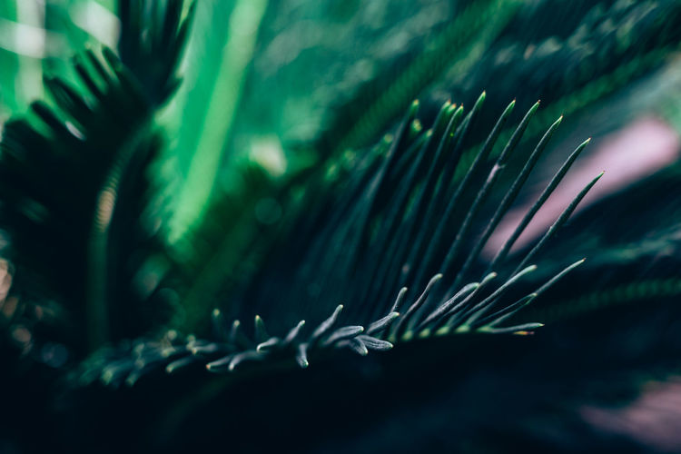 Growth Plant Green Color Selective Focus Leaf Close-up Plant Part Beauty In Nature Nature No People Day Tree Outdoors Freshness Water Focus On Foreground Blurred Motion Green Land Palm Leaf Blade Of Grass Foliage Backgrounds Copy Space Scrub My Best Photo